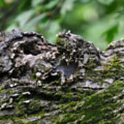 Mossy Tree Knot Art Print