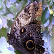 Moth On Blue Flowers Art Print