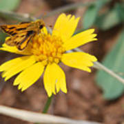 Moth On Yellow  Art Print
