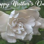 Mother's Day Gardenia Art Print