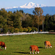 Mount Baker From Langley Bc Art Print by Marion McCristall