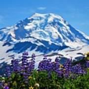 Mount Baker Wildflowers Art Print