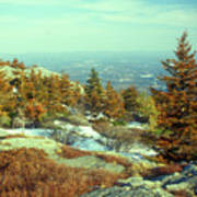 Mount Monadnock Spruce Injury Art Print