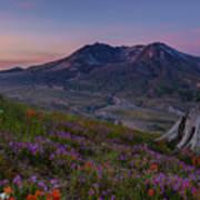 Mount St Helens Renewal Art Print