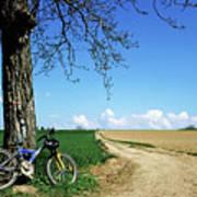 Mountain Bike Under A Tree Beside Dirt Road Art Print