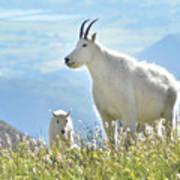 Mountain Goat Momma And Kid Art Print