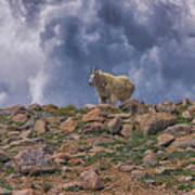 Mountain Goat Overlook Art Print