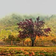Mountain Haze In A Oak Glen Autumn Art Print