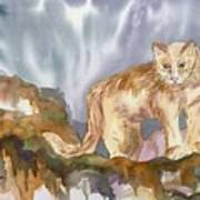 Mountain Lion On The Rocks  Art Print