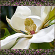 Mountain Magnolia Art Print by Bell And Todd