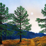 Mountain Pines Art Print