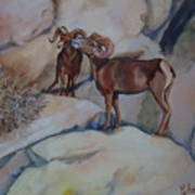 Mountain Sheep Gab Session Art Print