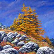 Mountain Tamaracks Art Print