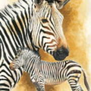 Mountain Zebra Art Print