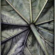 Mounts Botanical Gardens 2360 Art Print