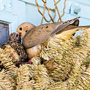 Mourning Dove And Chick Art Print