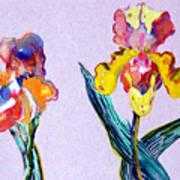 Mr. And Mrs. Yellow Iris Art Print