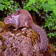 Mr. Squirrel Art Print