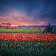Mt. Hood And Tulip Field At Dawn Art Print