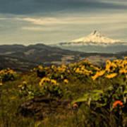 Mt. Hood And Wildflowers Art Print