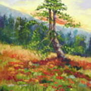 Mt. Jumbo Tree Ak Art Print