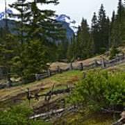 Mt. Trails Art Print