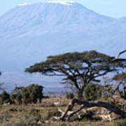 Mt.kilimanjaro Art Print