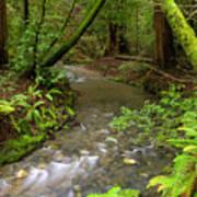 Muir Woods Stream Art Print