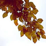 Mulberry Autumn Art Print