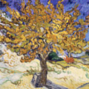 Mulberry Tree Art Print
