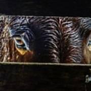 Mule Eyes Art Print
