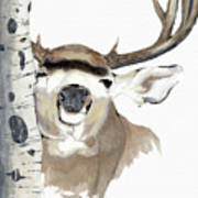 Mulie Buck And Aspen Art Print