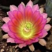 Multi Color Flower Art Print