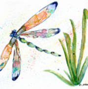 Multi-colored Dragonfly Art Print