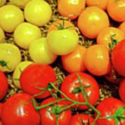 Multi Colored Tomatoes Art Print