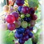 Multicolor Grapes Art Print