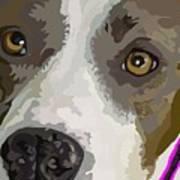 Murphy -- The Closeup Art Print