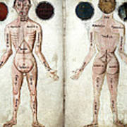 Muscle Man, Brains Ventricles, 15th Art Print