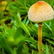 Mushroom And Grass Art Print by Fabio Giannini