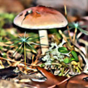 Mushroom And Moss Art Print