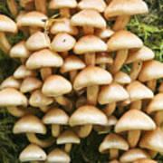 Mushroom Condo Art Print