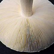 Mushroom Macro Expressionistic Effect Art Print
