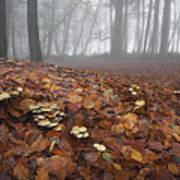 Mushroom Mound Art Print