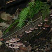 Mushroom Row Art Print