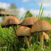 Mushroom Art Print by Sheila Werth