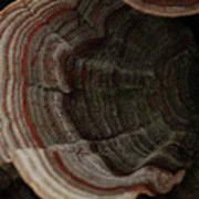 Mushroom Shells Art Print