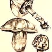 Mushroom Study 4 Art Print