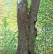 Muskoka Maple Art Print