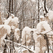 Muskoka Winter 6 Art Print