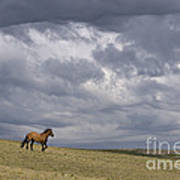 Mustang And Stormy Sky Art Print
